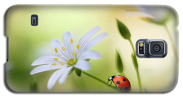 Ladybug Galaxy S5 Case - Summer Beauties by Mandy Disher
