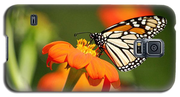 Summer Beauty Galaxy S5 Case by Living Color Photography Lorraine Lynch
