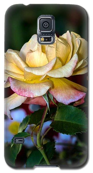 Summer Beauty Galaxy S5 Case