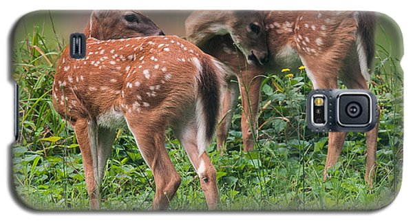 Summer Fawns Galaxy S5 Case