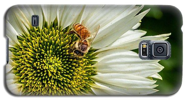 Summer Garden 3 Galaxy S5 Case by Susan Cole Kelly Impressions