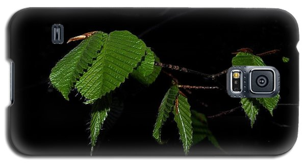 Summer Leaves On Black Galaxy S5 Case