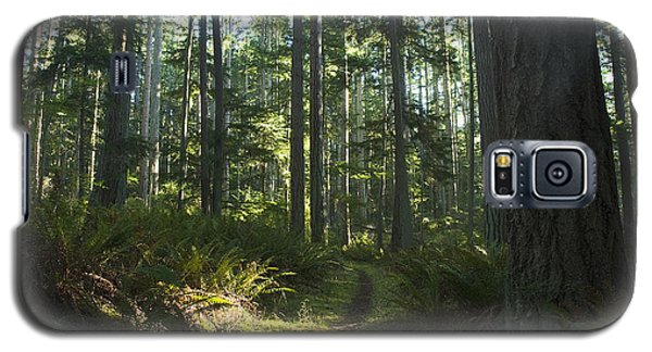 Summer Pacific Northwest Forest Galaxy S5 Case