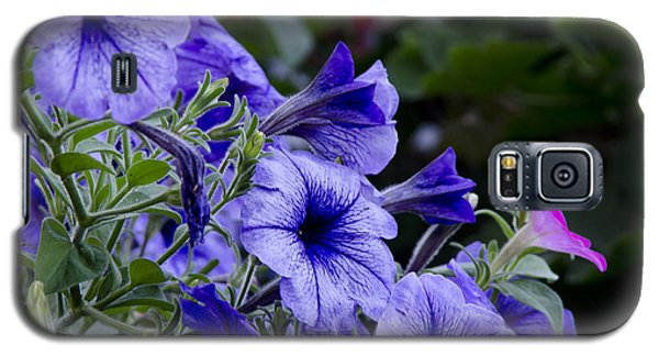 Summer Petunias Galaxy S5 Case by Wilma  Birdwell