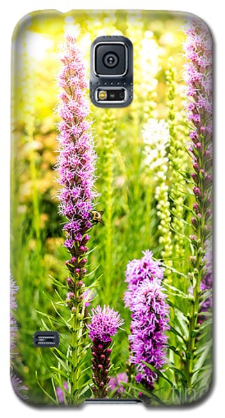Summer Pink 2 Galaxy S5 Case by Susan Cole Kelly Impressions
