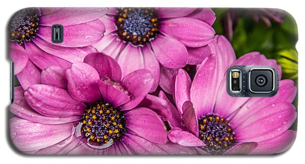 Summer Pink 3 Galaxy S5 Case by Susan Cole Kelly Impressions
