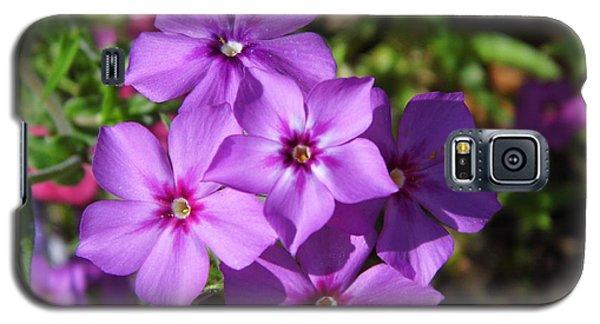 Galaxy S5 Case featuring the photograph Summer Purple Phlox by D Hackett