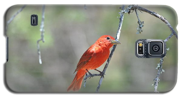 Summer Tanager Galaxy S5 Case
