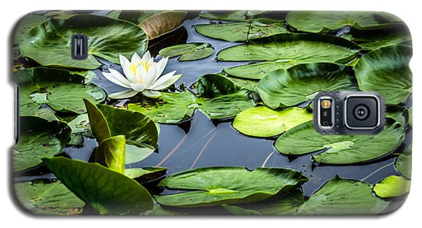 Summer Water Lily 1 Galaxy S5 Case by Susan Cole Kelly Impressions