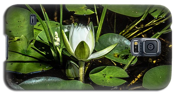 Summer Water Lily 2 Galaxy S5 Case by Susan Cole Kelly Impressions