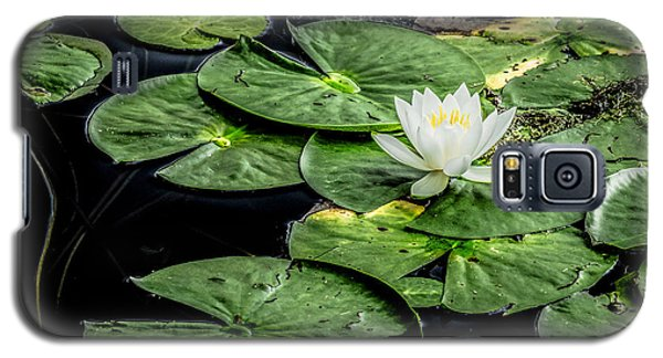 Summer Water Lily 3 Galaxy S5 Case by Susan Cole Kelly Impressions