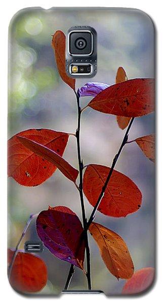 Summer's End Galaxy S5 Case