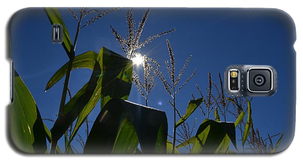 Sun Above The Corn  Galaxy S5 Case by Lyle Crump