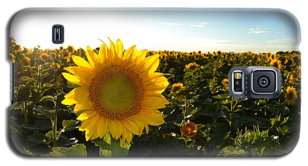 Galaxy S5 Case featuring the photograph Sun And Sunflower 2  by Lyle Crump