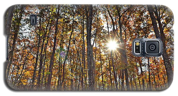 Sun Beams Dance In Autumn Trees Galaxy S5 Case