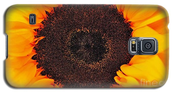 Sun Delight Galaxy S5 Case