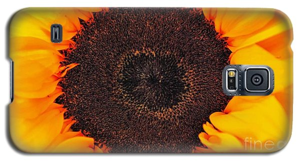 Sun Delight Galaxy S5 Case by Angela J Wright