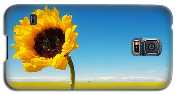 Galaxy S5 Case featuring the photograph Sun Drenched Dreams by Lisa Knechtel