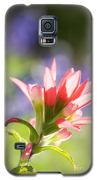 Sun Filled Paintbrush Galaxy S5 Case