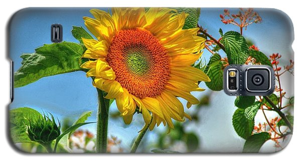 Sun Flower Galaxy S5 Case by Ed Roberts
