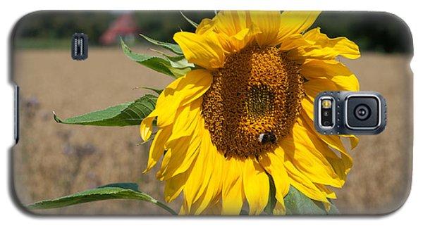 Sun Flower Fields Galaxy S5 Case