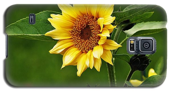 Galaxy S5 Case featuring the photograph Sun Flower Shines by Al Fritz