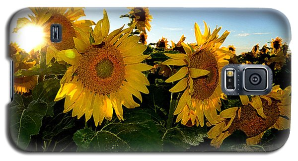 Sun Flowers And Pollen Wcae2  Galaxy S5 Case