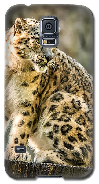 Sun Leopard Portrait Galaxy S5 Case