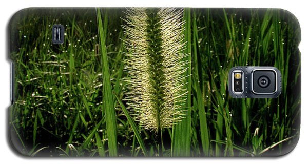 Galaxy S5 Case featuring the photograph Sun-lite Grass Seed by Donna Brown