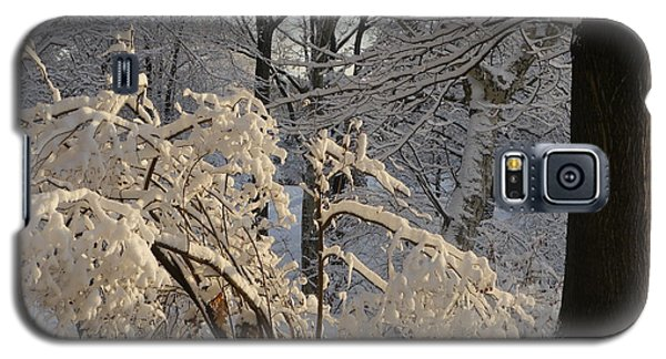 Sun On Snow Covered Branches Galaxy S5 Case