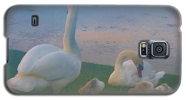 Galaxy S5 Case featuring the photograph Sun Setting On Swan Family by Jeanette Oberholtzer