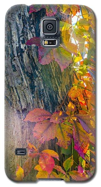 Sun Shards Galaxy S5 Case