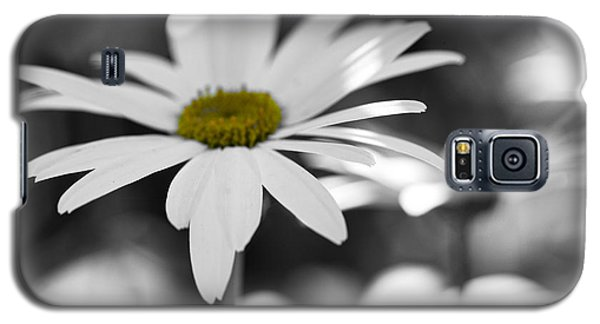 Galaxy S5 Case featuring the photograph Sun-speckled Daisy by Don Schwartz