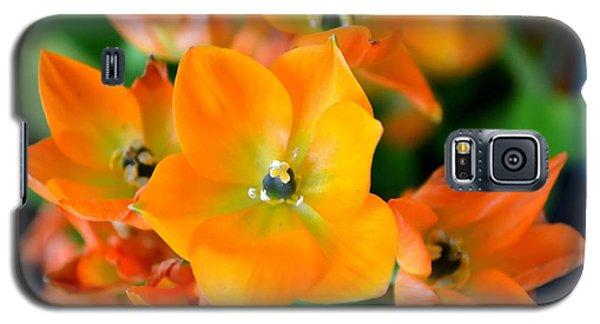 Sun Star Galaxy S5 Case by Deena Stoddard