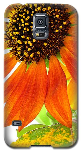 Galaxy S5 Case featuring the photograph Sun Up by Kathy Bassett