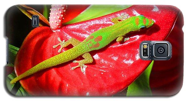 Sunbathing Gecko Galaxy S5 Case