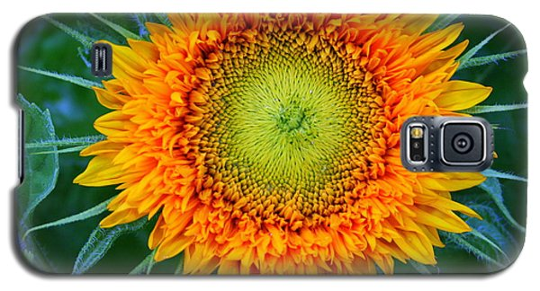 Galaxy S5 Case featuring the photograph Sunburst by Debra Kaye McKrill