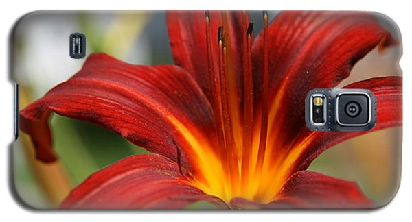 Galaxy S5 Case featuring the photograph Sunburst Lily by Neal Eslinger