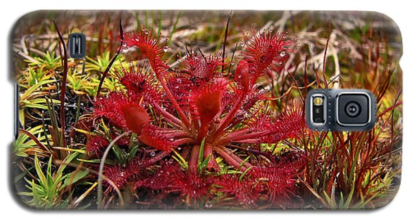 Sundew.  Galaxy S5 Case