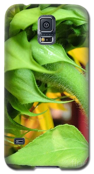 Sunflower - The Back Side Galaxy S5 Case