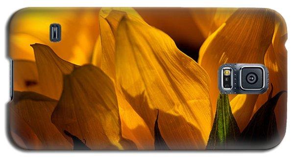 Sunflower 14 Galaxy S5 Case