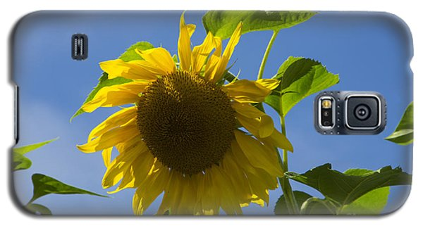 Sunflower 2 Galaxy S5 Case