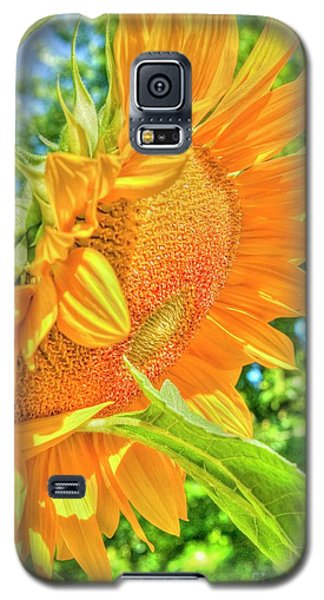 Sunflower 2 Galaxy S5 Case by Rod Wiens