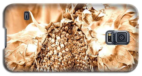 Galaxy S5 Case featuring the photograph Sunflower - After Summer Has Gone by Janine Riley