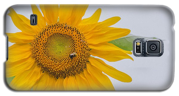 Sunflower And Bee Galaxy S5 Case