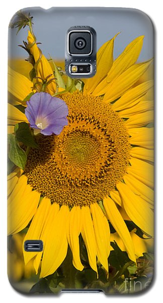 Galaxy S5 Case featuring the photograph Sunflower And Friend by Chris Scroggins