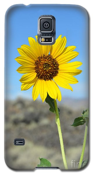 Sunflower By Craters Of The Moon Galaxy S5 Case by Debra Thompson