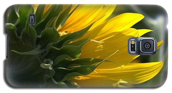 Colorful Galaxy S5 Case - #sunflower #closeup by Georgia Fowler