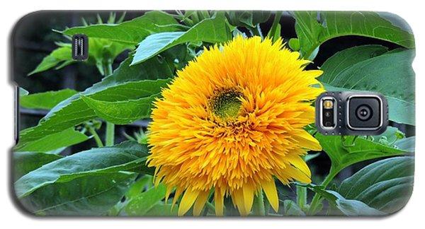 Sunflower Drama Galaxy S5 Case by Teresa Schomig