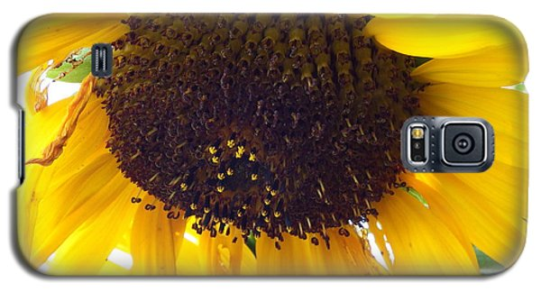 Galaxy S5 Case featuring the photograph Sunflower - Falling For You by Janine Riley
